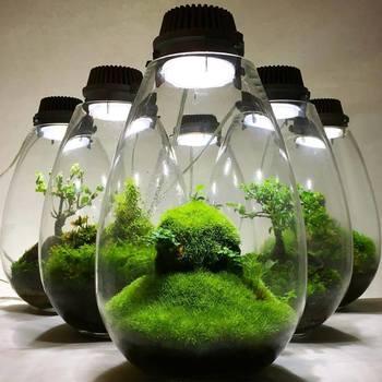 Mosslight-LEDの展示.jpg